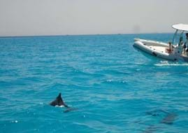 Red Sea Dolphin Trip With Bullet Speed Boats