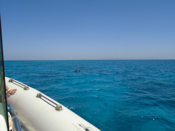 Dolphin house trip in Hurghada