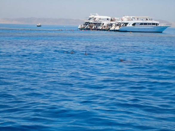 Dolphin trip in Hurghada, Red Sea