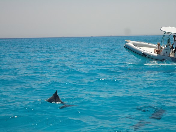 Dolphin Spotting in Hurghada