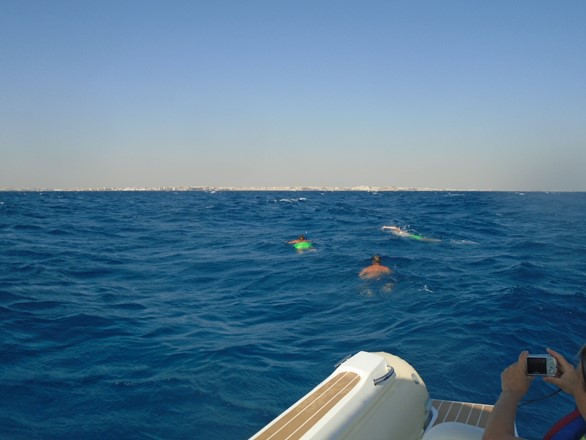 Private Dolphin spotting tour in Hurghada