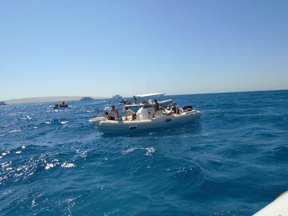 Bullet Speedboats searching for dolphins