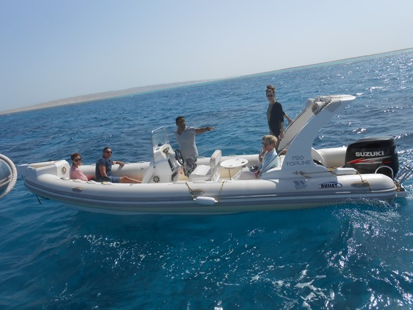 private dolphin spotting trip in Hurghada