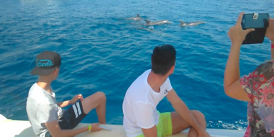 Dolphin house trip in Hurghada with Bullet Speedboats